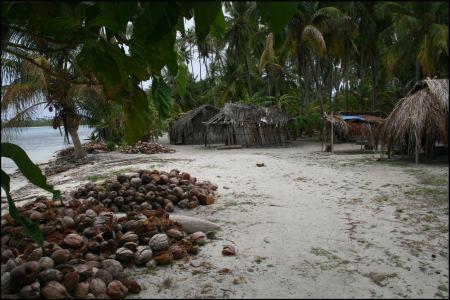 0-kokosnusse-werden-gestapelt.jpg