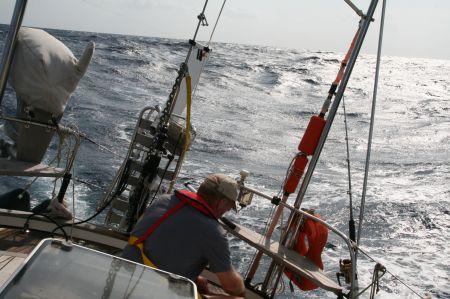 Bei ordendlichem Seegang wird der Fisch ausgenommen und ....