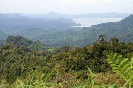 Regenwald auf der Insel v.......