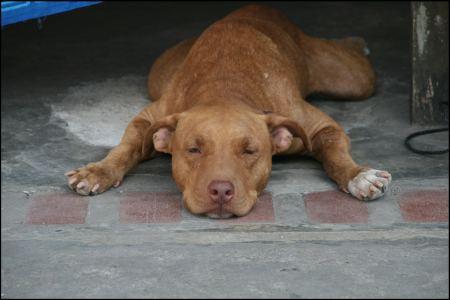 10-hund-bei-mittagsschlaf.jpg