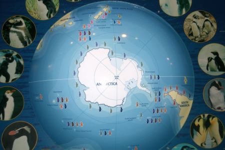 viele Informationen - wo gibt es noch welche Pinguine auf der Welt.