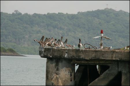 12-pelikane-hinter-uns.jpg