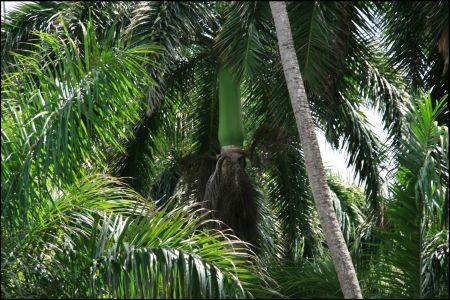 12-umgeben-von-palmen.jpg