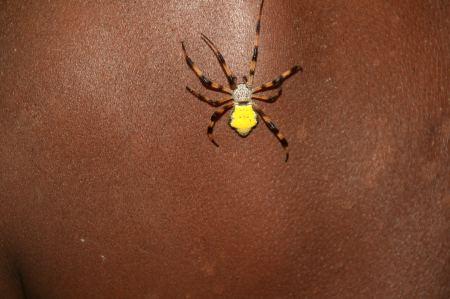 Diese Spinne klettert langsam ....