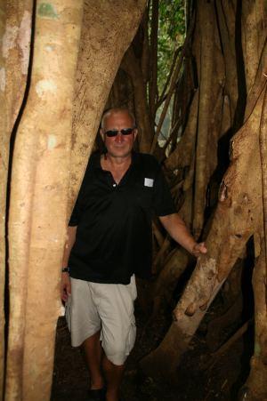 Rüdiger hinter die dicken Wurzeln und Lianen des Baums.