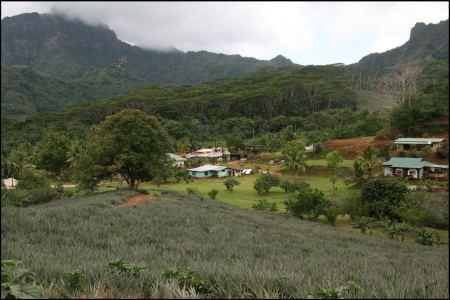 2-ananasfelder.jpg