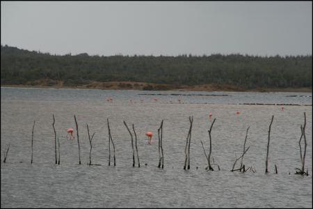2-flamingo-viele.jpg