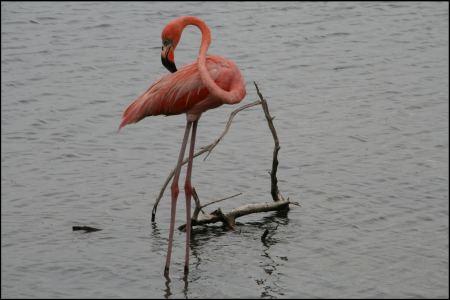 2-flamingo.jpg