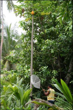 23-papaya-zum-abschied.jpg