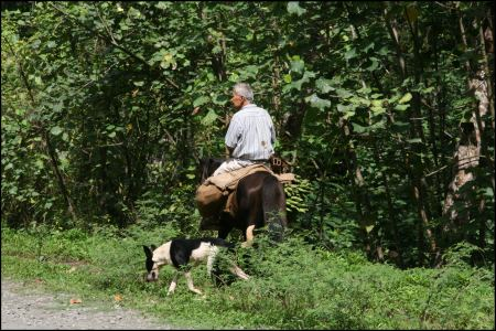 3-bananenerne-mit-pferd.jpg