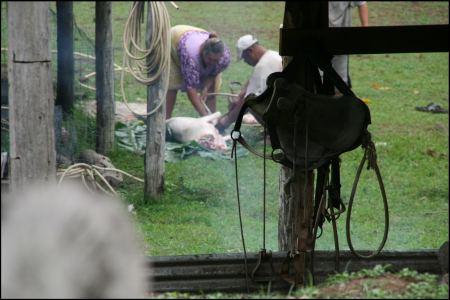 3-schwein-geschlachtet.jpg