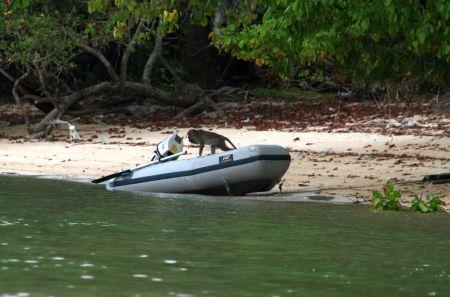 .... es dauert nicht lange, dann nehmen die Affen unser Dhingi in Beschlag.