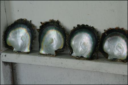 5-austernschalen-glanzen.jpg