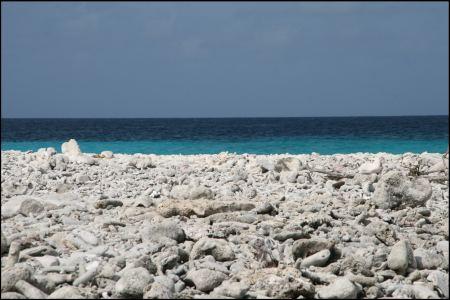5-korallen-uberall-1.jpg