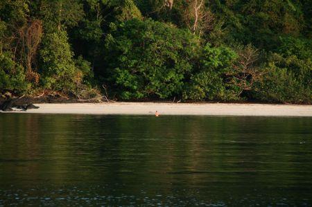 .... zum nahe gelegenen Strand. Dort trifft er Affen und Echsen und weil der Weg so weit ist ....