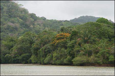 6-eindruck-urwald-um-gatunsee.jpg