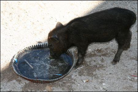 6-gluckliches-schwein.jpg