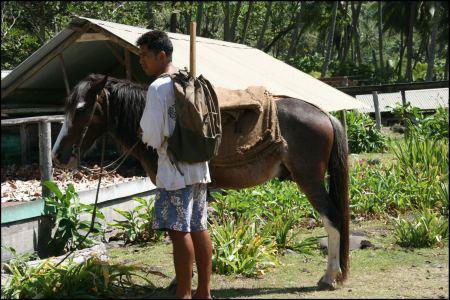 6-mit-dem-pferd-zum-cocosnusse-sammeln.jpg