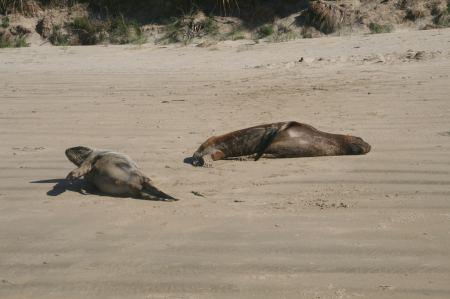 Hier die Zwei sind eben aus dem Meer gekommen und wir denken, die sind auch müde ....
