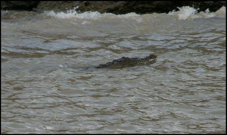 74-krokodil.jpg
