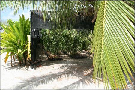 9-vanillepflanzen.jpg