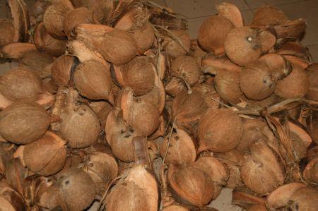 Frische Cocosnüsse und ...
