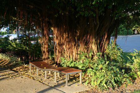 Richtung Innenstadt führt eine lange Alle mit alten Bäumen unter denen Liegen zum Ausruhen für jedermann stehen.
