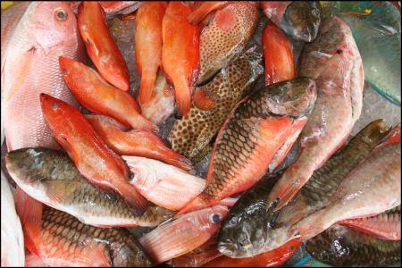 fischerei-fische.jpg