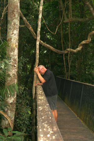 Durch den REgenwald führt ein Weg. Man sieht riesige Lianen und unwillkürlich fällt uns Tarzan ein.