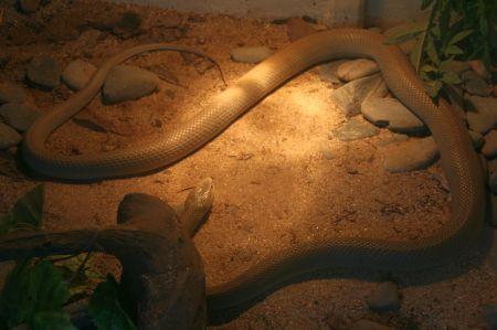 In einem kleinen Zoo kann man die Kriechtiere anschauen, die es im Regenwald gibt. Schlangen, Skorpione und riesige Spinnen.